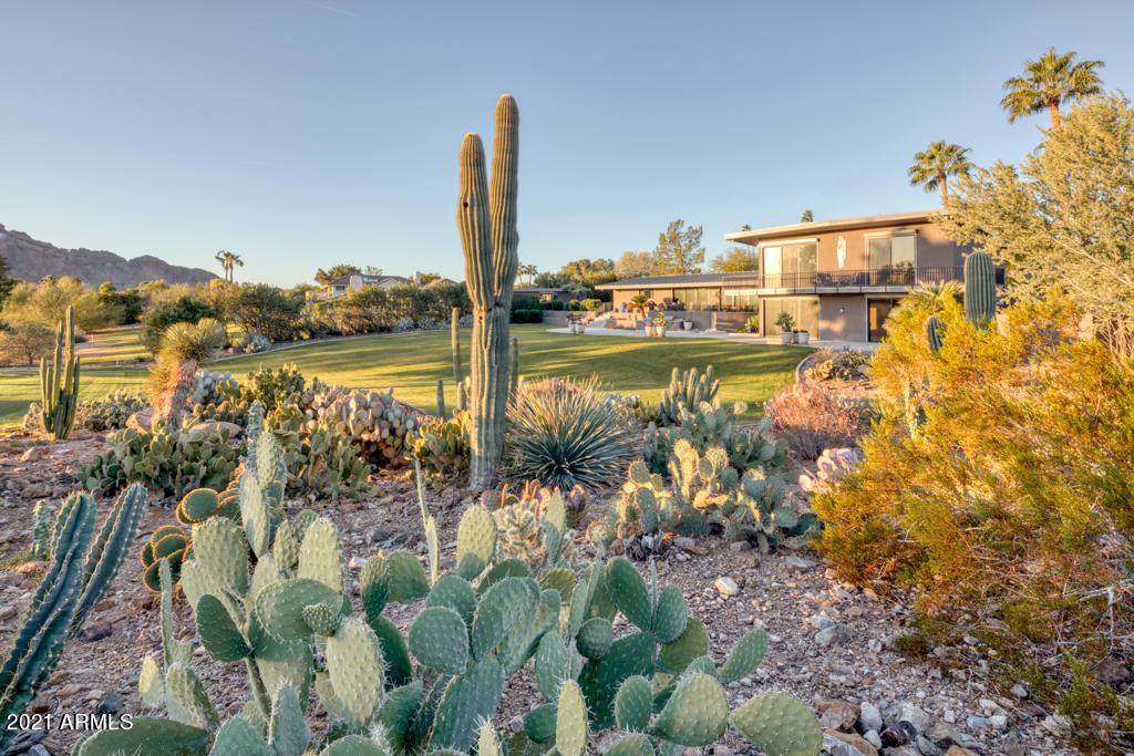 Specimin-garden-with-saguaro-6809-Little-Tatum